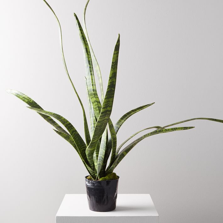 Faux Potted Snake Plant